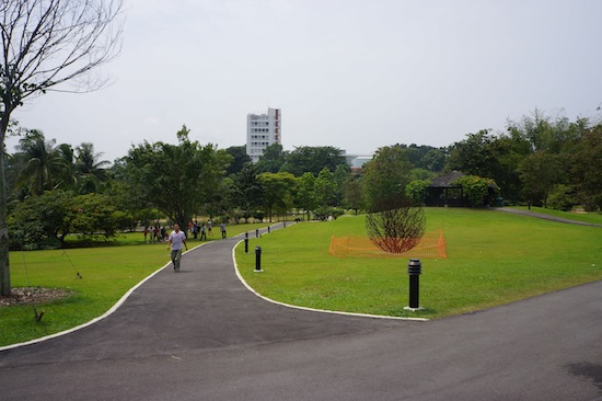 Take a Walk at Singapore Botanic Garden