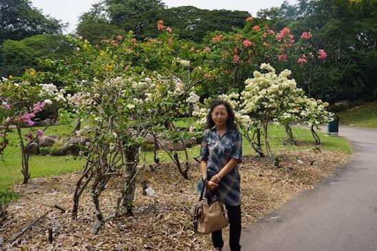 Singapore Botanic Garden Picture