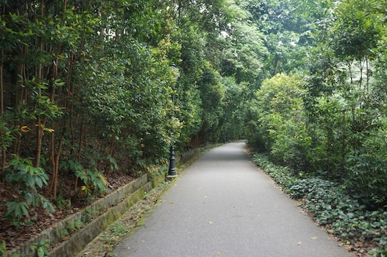 Singapore Botanic Garden Pictures