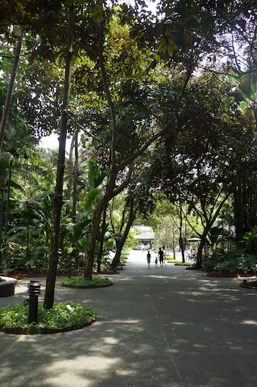 Singapore Botanical Garden Picture