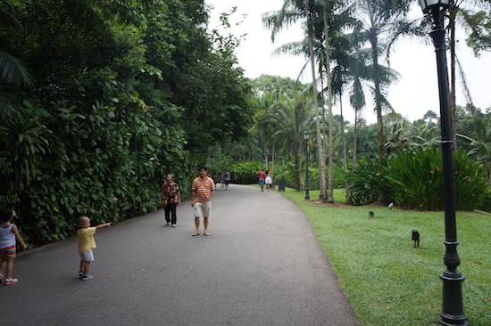 Singapore Botanical Garden Photos