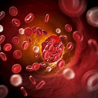 kolestrol dalam darah